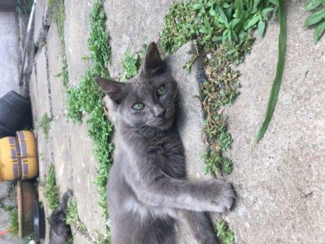 gatinhos para adoção  - Foto 4