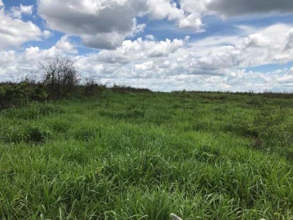 1.104 hectares, com 740 aberto Nova Ubiratã -MT