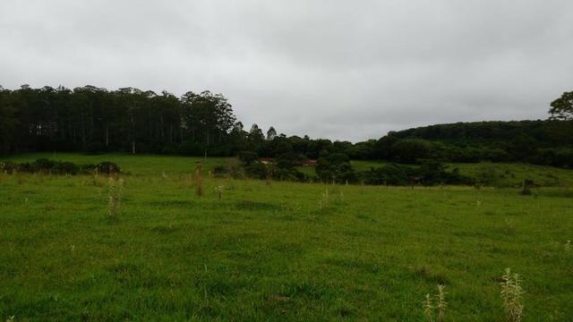 Otima fazenda com 73 alqueires na regiao de itapetininga - Foto 3