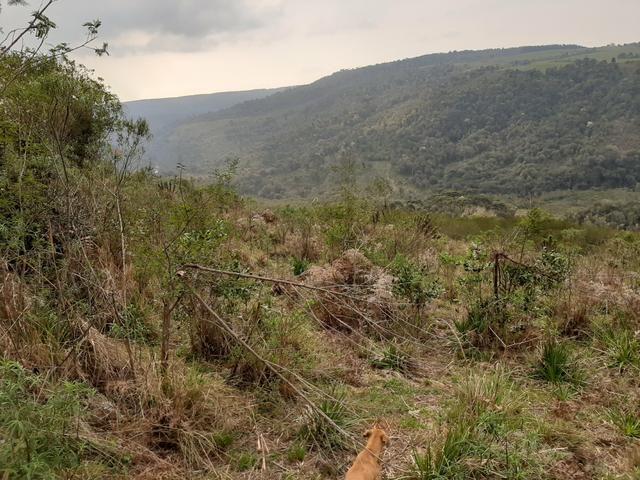 Fazenda de 100 Alqueires. 70 de capoeira - 16 km da Colônia Vitória. Guarapuava PR - Foto 17
