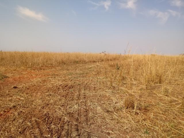Fazenda 1.100 hectares Lago do Manso na Água Fria - Foto 14