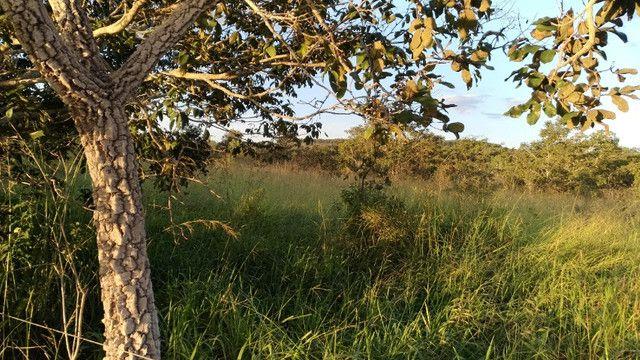 Sitio 20,10 hectares - Foto 6
