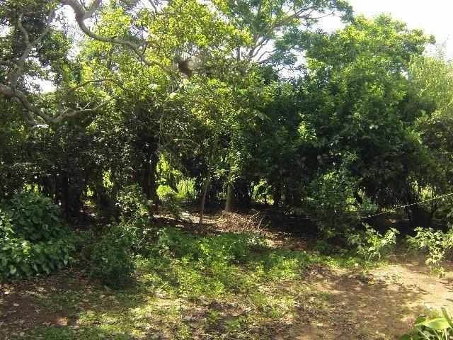 Fazenda Goianira 8 alqueres - Foto 11