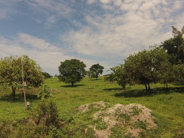 Fazenda Goianira 8 alqueres - Foto 17