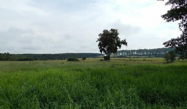 Otima fazenda com 73 alqueires na regiao de itapetininga - Foto 14