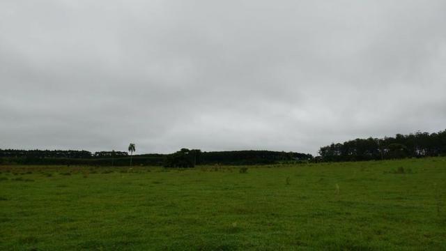 Otima fazenda com 73 alqueires na regiao de itapetininga