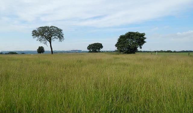 Otima fazenda com 73 alqueires na regiao de itapetininga - Foto 12