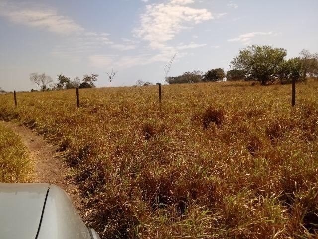 Fazenda 1455 hectares, em Acorizal, formado 900 hec - Foto 7