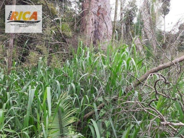 Fazenda à venda, com 750 hectares na Área Rural de Porto Velho/RO - Foto 3