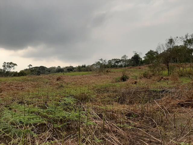 Fazenda de 100 Alqueires. 70 de capoeira - 16 km da Colônia Vitória. Guarapuava PR - Foto 16