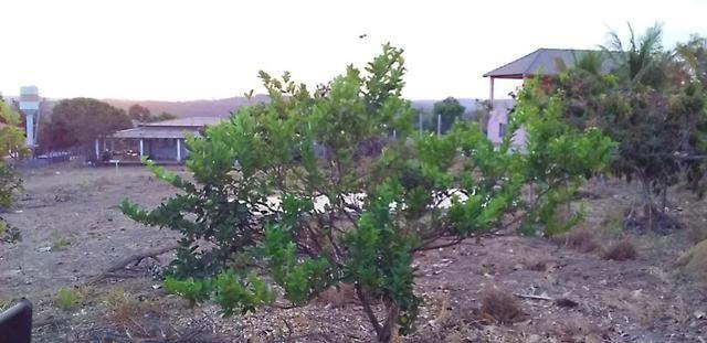 Chácara com casa sede, árvores frutíferas, 2.500m², 40 minutos de Taguatinga! - Foto 8