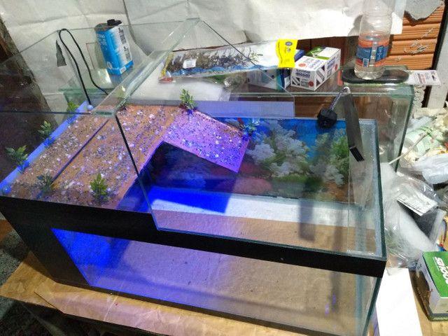 Aquaterrario e aquários - Foto 6