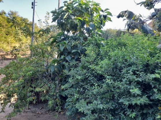Casa para Venda em Tanguá, Mutuapira, 3 dormitórios, 1 banheiro - Foto 13