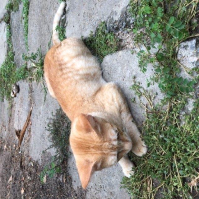 gatinhos para adoção  - Foto 6
