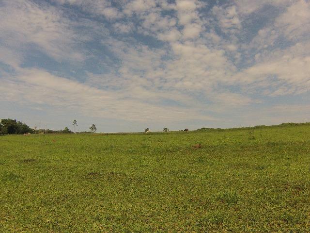 Fazenda Goianira 8 alqueres - Foto 9