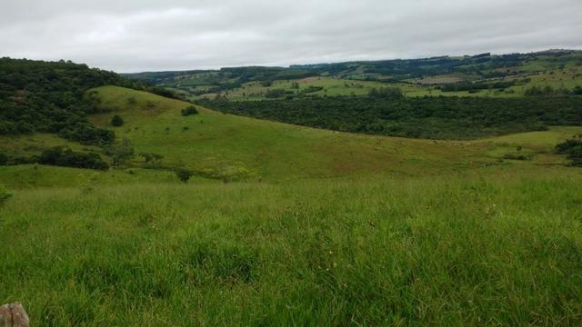 Otima fazenda com 73 alqueires na regiao de itapetininga - Foto 5