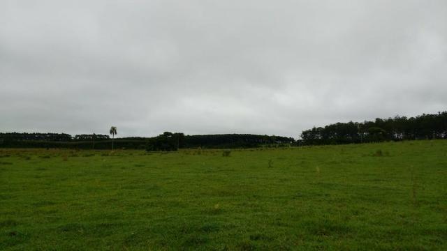 Otima fazenda com 73 alqueires na regiao de itapetininga - Foto 2