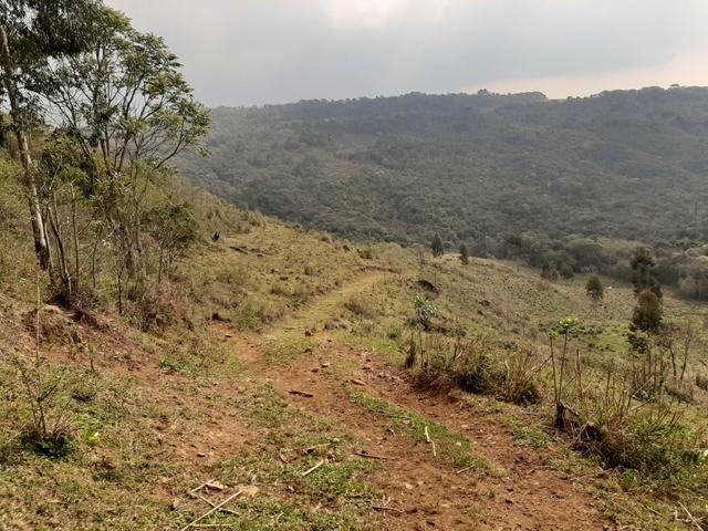 Fazenda de 100 Alqueires. 70 de capoeira - 16 km da Colônia Vitória. Guarapuava PR - Foto 12