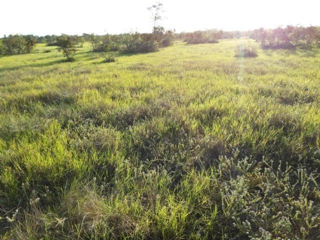 245 Ha Pecuaria Piscicultura Lazer Beira Rio Proximo Cuiaba Santo Antonio MT - Foto 3