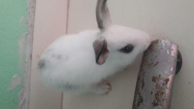 Vendo filhotes de coelho - Foto 3