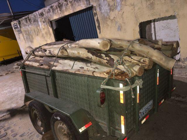 24 troncos de madeira de eucalipto