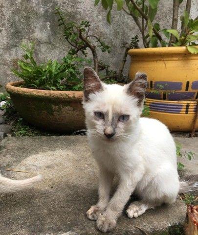 gatinhos para doação  - Foto 2