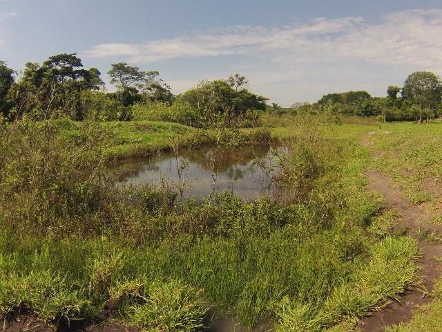 Fazenda Goianira 8 alqueres - Foto 4