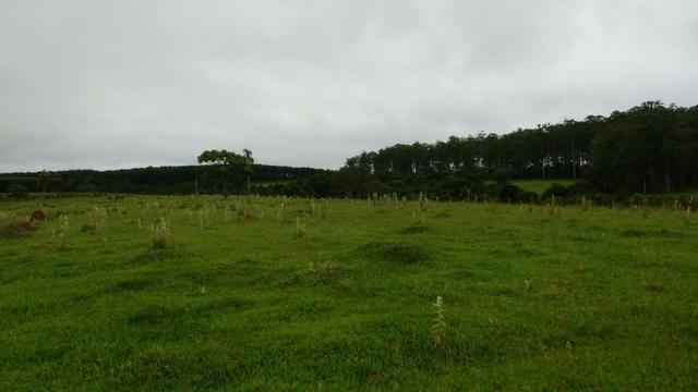 Otima fazenda com 73 alqueires na regiao de itapetininga - Foto 7