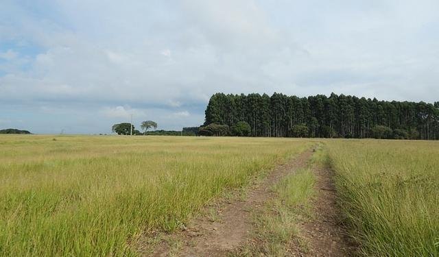 Otima fazenda com 73 alqueires na regiao de itapetininga - Foto 11