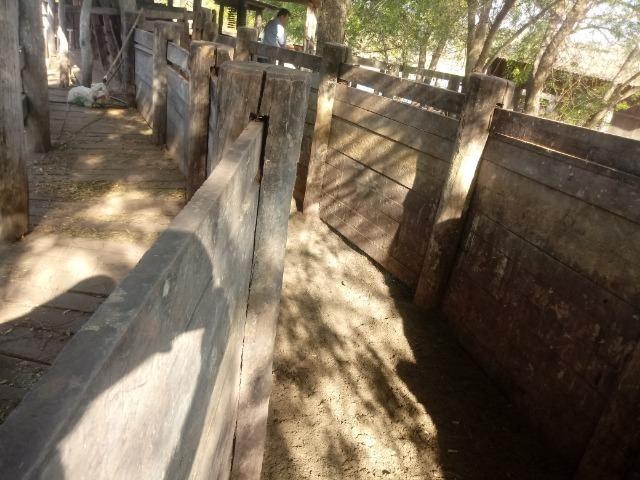 Fazenda 1455 hectares, em Acorizal, formado 900 hec - Foto 3