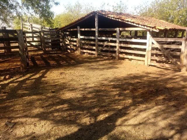 Fazenda 1455 hectares, em Acorizal, formado 900 hec - Foto 8
