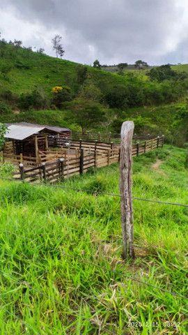 Fazenda 60.5 alqueires formada brechiarao , MG5 e brechiarinha. - Foto 3
