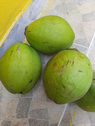 Coco orgânico