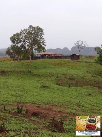 FAZENDA À VENDA EM RECURSOLÂNDIA - TO - DE 156 ALQUEIRÕES (Dupla aptidão) - Foto 15