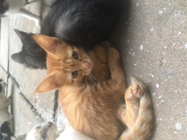 gatinhos para doação  - Foto 5
