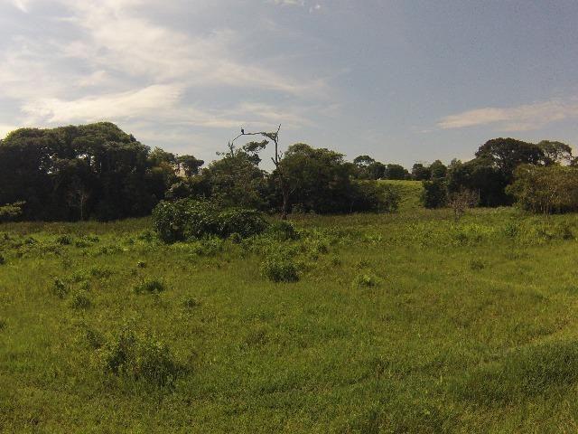Fazenda Goianira 8 alqueres - Foto 14