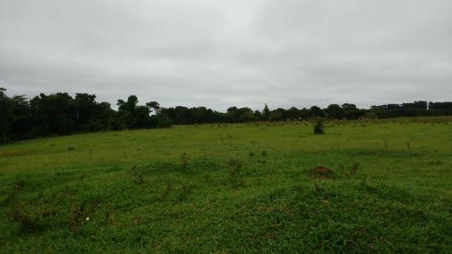 Otima fazenda com 73 alqueires na regiao de itapetininga - Foto 8
