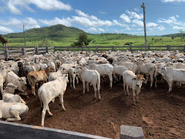 Vendo Fazenda de Gado em Grajaú - Foto 3