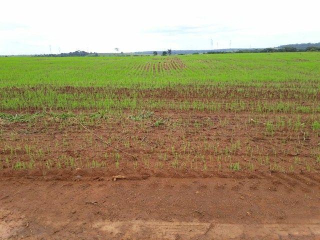 Fazenda em RO Próximo à Porto Velho  - Foto 3