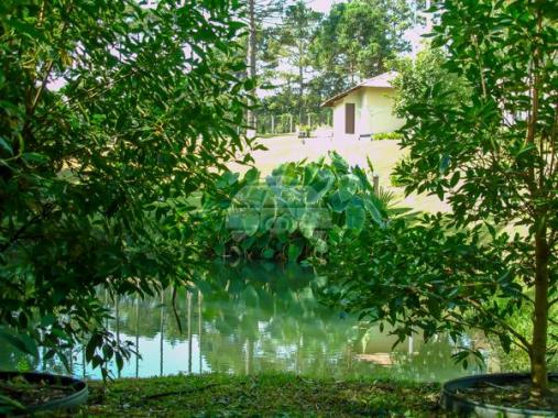 Chácara à venda em Capão alto, Lapa cod:141314 - Foto 10
