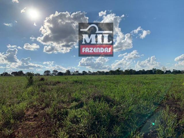 Fazenda dupla apitidão 200 Alqueires ( 968 hectares ) Itajá-GO - Foto 2