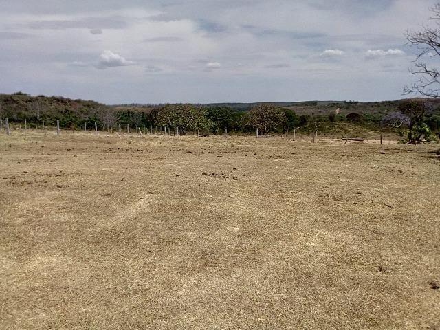 Venda de Fazenda, 650 hectares, Guiratinga - MT - Foto 4
