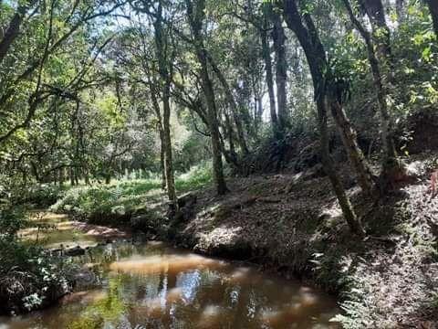Chacara em mandirituba troco por casa na região de curitiba - Foto 8