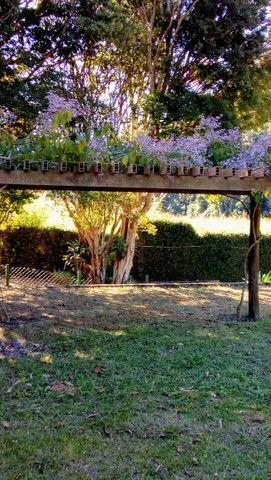 Paisagismo e manutenção de jardins - Foto 4