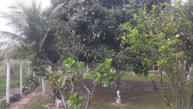 Vendo Terreno (Mini Sitio) em Itaguaí/RJ - Foto 12