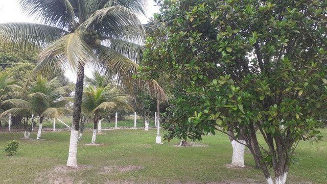 Vendo Terreno (Mini Sitio) em Itaguaí/RJ - Foto 11