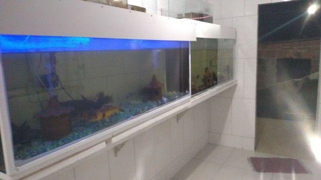 2 aquários - Foto 2
