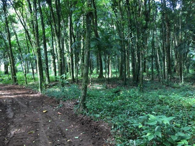 Terreno para chácara Quiriri - Foto 3