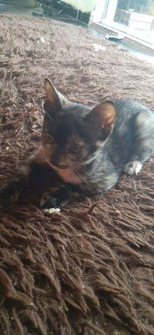 Doação responsável (gatinha mesclada