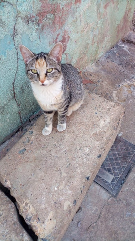 Doação de lindas gatas já castradas - Foto 6